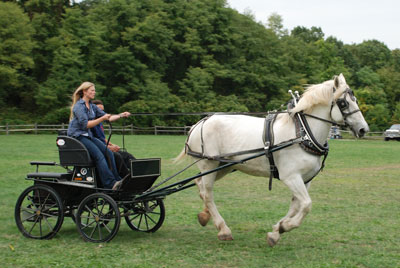 Horse Drawn Wedding Carriage Horse- Sonadora
