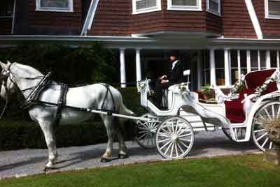 Horse Drawn Wedding Carriage Horse