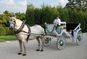 Horse Drawn Carriges nY